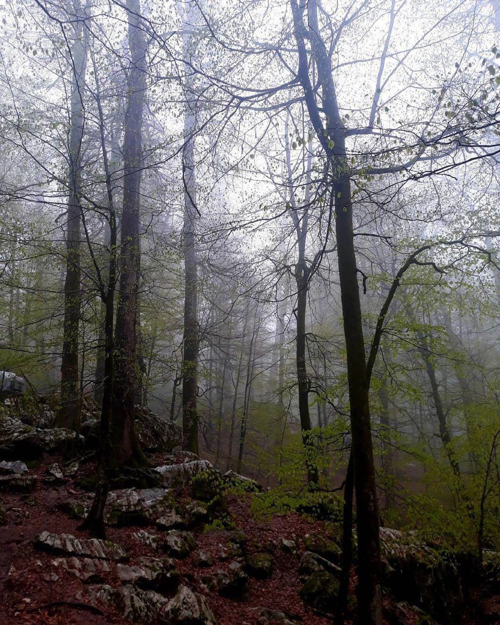 جنگلهای نمکآبرود