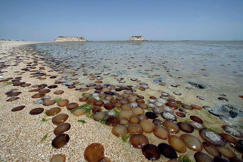 تخم لاکپشتها در ساحل جزیرۀ قشم