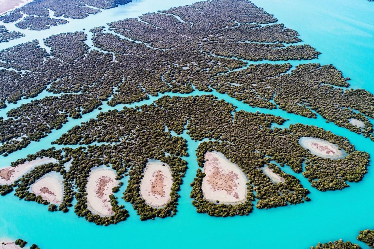 جنگلهای حرا در جزیرۀ قشم