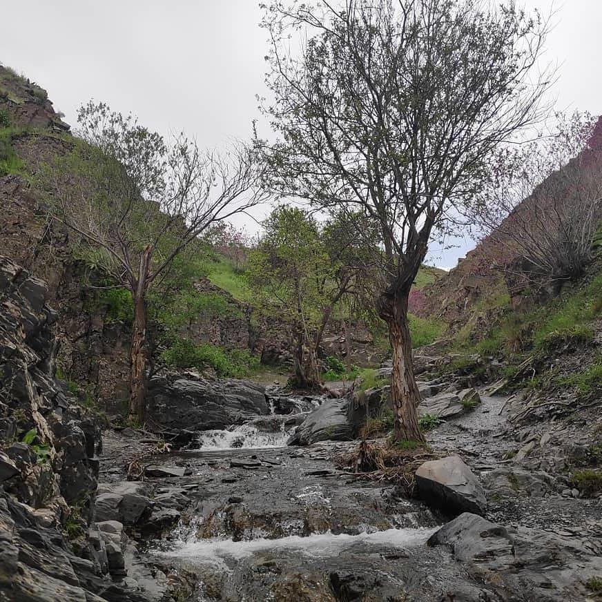 «دره ارغوان در قاب یک تصویر»