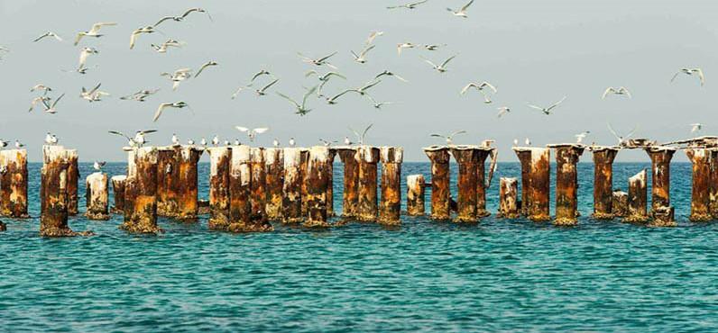 جزیرۀ کیش؛ مرکز توریستی گردشگری بینالمللی