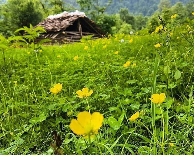 بلوردکان، روستایی در منطقۀ کوهپایهای – جنگلی