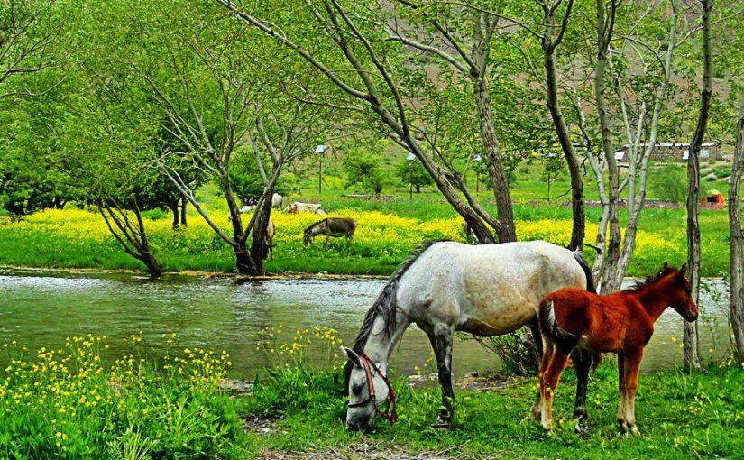 استان لرستان؛ سبز و خرم، سرشار از جنگلهای بلوط
