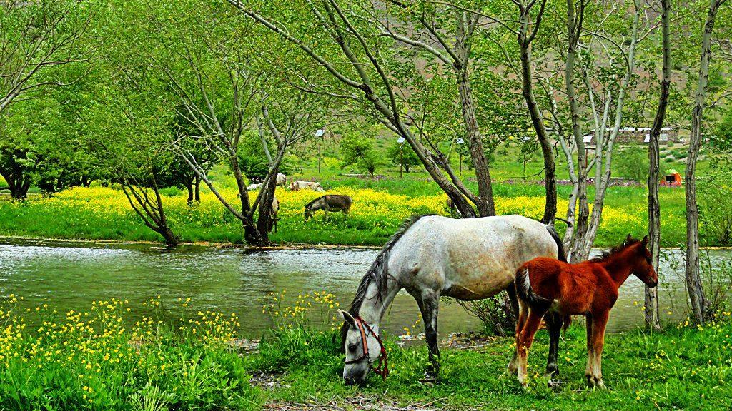 Lorestan , Iran