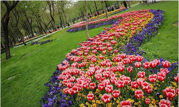 رقص رنگ و عطر گلهای بهاری در بوستانهای مشهد