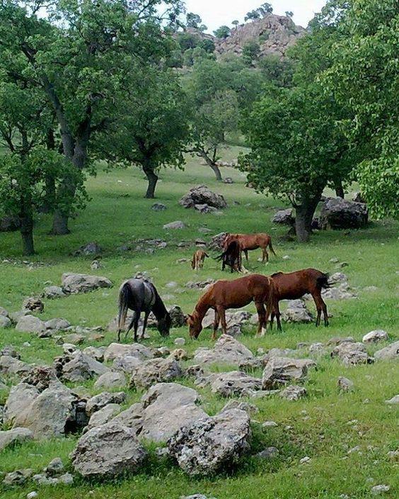 شهرستان چگنی - لرستان
