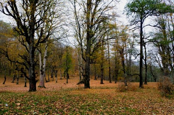 بوستان جنگلی صفارود
