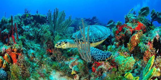 دنیای رنگی در اعماق آبها