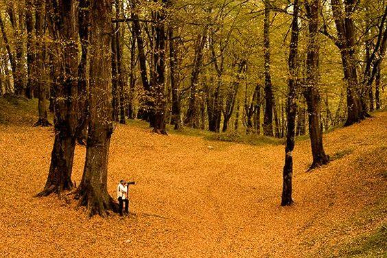 جنگل دالخانی در فصل پاییز