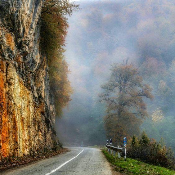 جنگل دالخانی و مه غلیظ سفید
