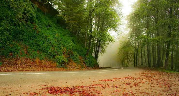 جنگل دالخانی؛ دالان بهشت، در جنوب شرقی رامسر