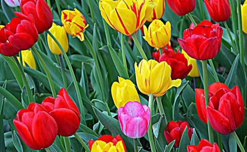 زیباییها در تقویم جای دارند (روز ملی گل و گیاه)