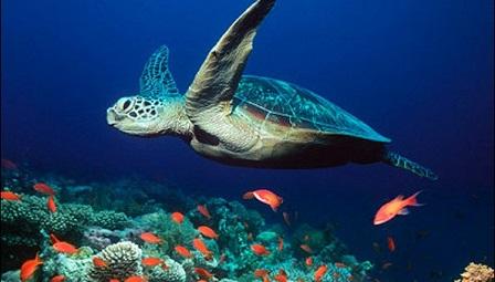لاک پشت های دریایی در جزیرۀ کیش