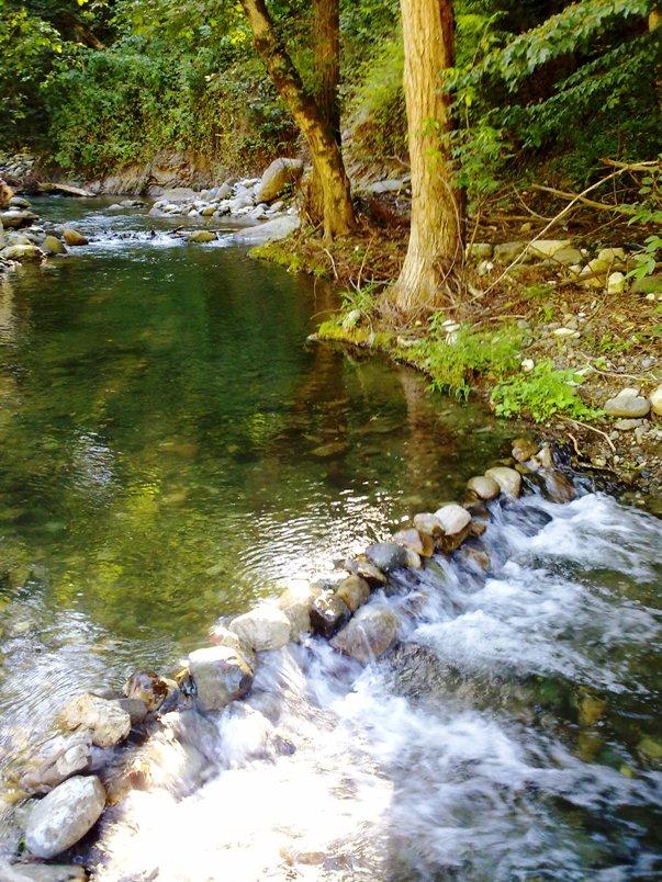 رودخانه شفارود