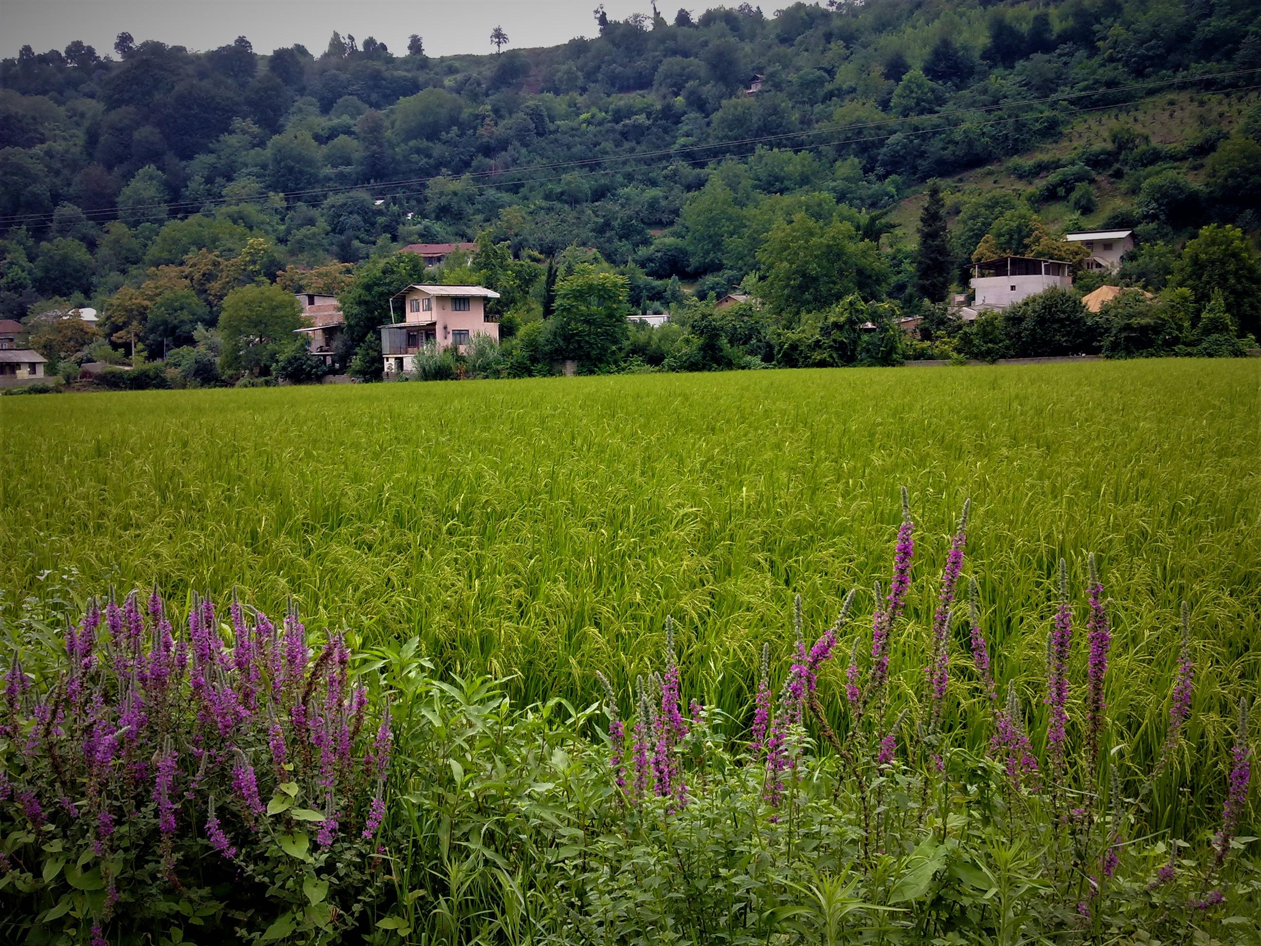 آهودشت ساری ، روستایی زیبا و دیدنی در استان همیشه سبز مازندران