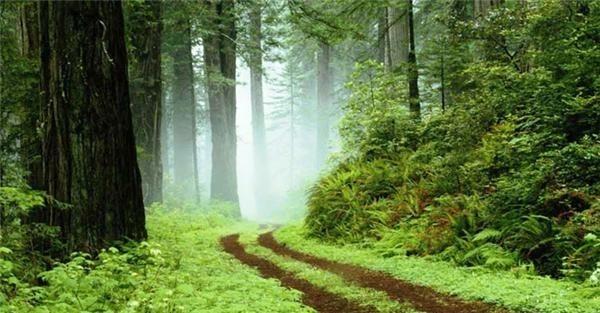 جنگل شفارود