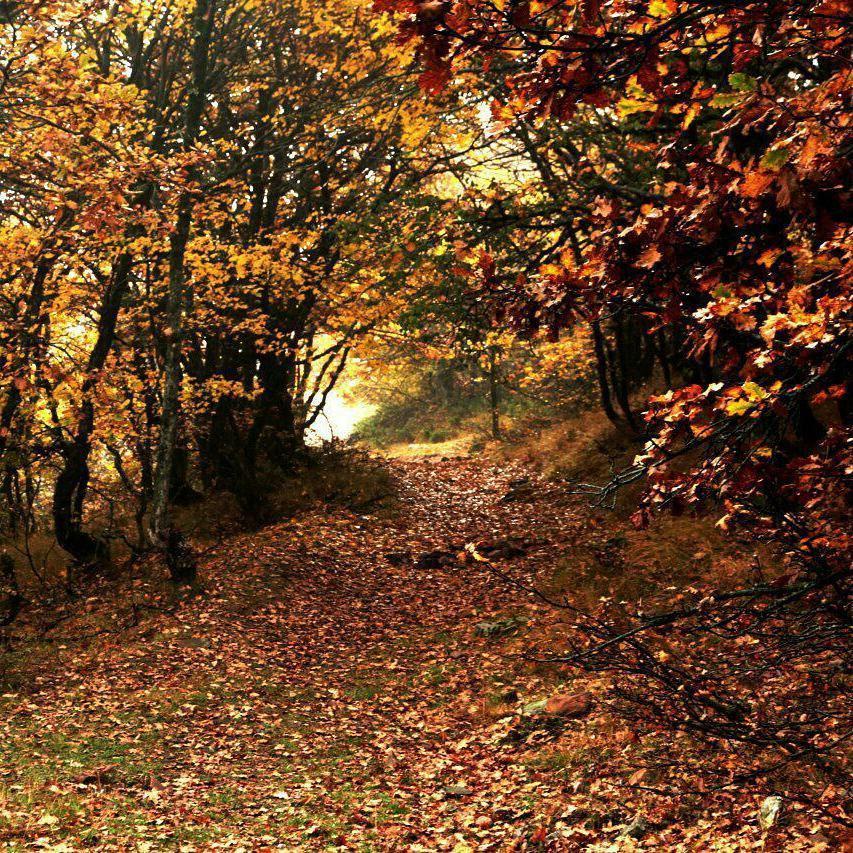پاییز زیبا در دل جنگل ابر