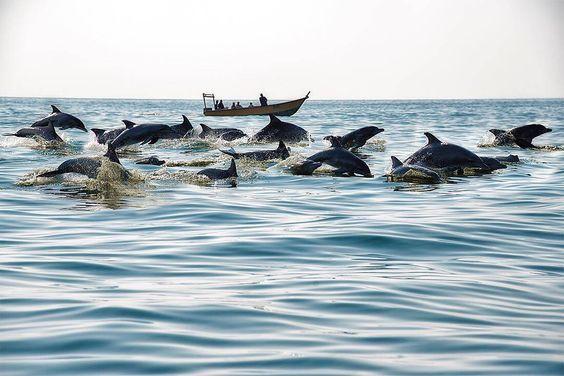رقص دلفینها در ساحل هنگام