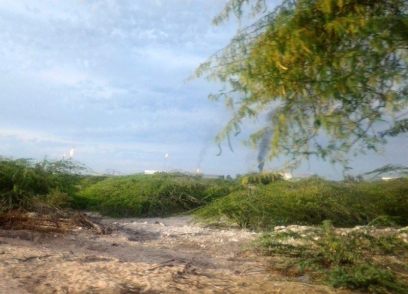 نبض حیات در جزیره سیری
