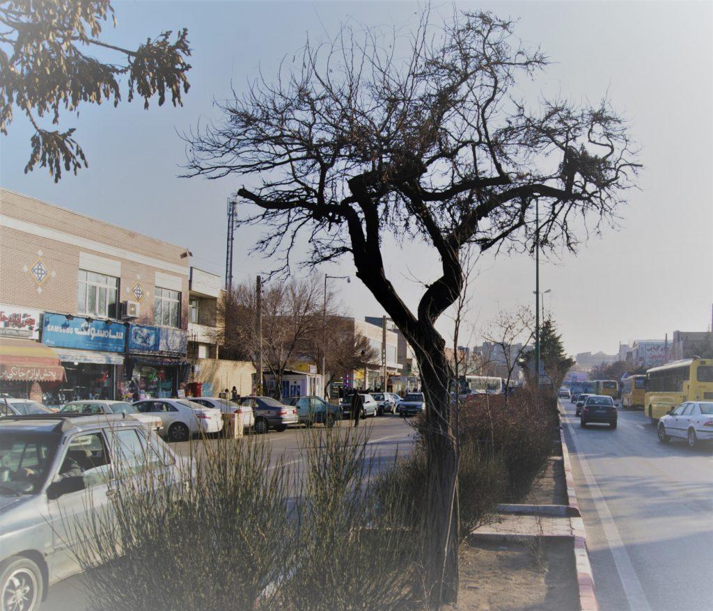محلۀ راسته کوچه در شهر تبریز
