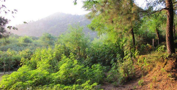 پارک جنگلی بیبی یانلو