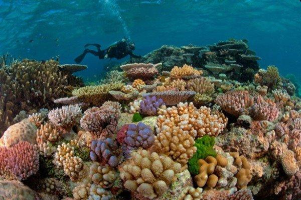 صخرههای مرجانی و زیبا در جزیره خارک