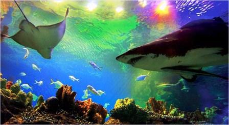 حیات وحش در آبهای خلیج فارس