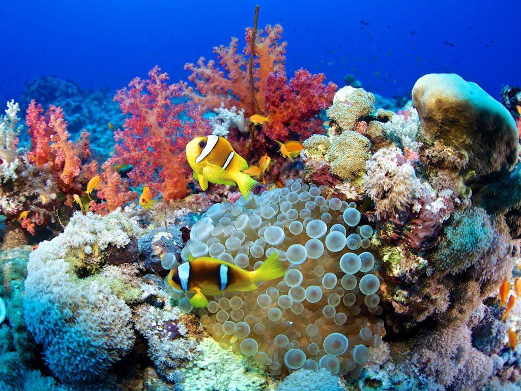 زندگی رنگارنگ در اعماق آبها