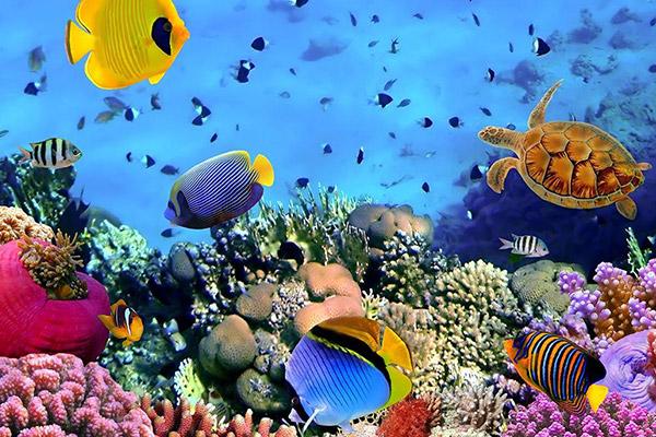 آکواریوم طبیعی خلیج فارس