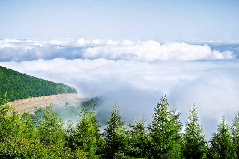 جنگل ابر در شاهرود تماشایی