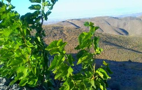 دیدنیهای جذاب در روستای بینظیر زشک در حوالی مشهد