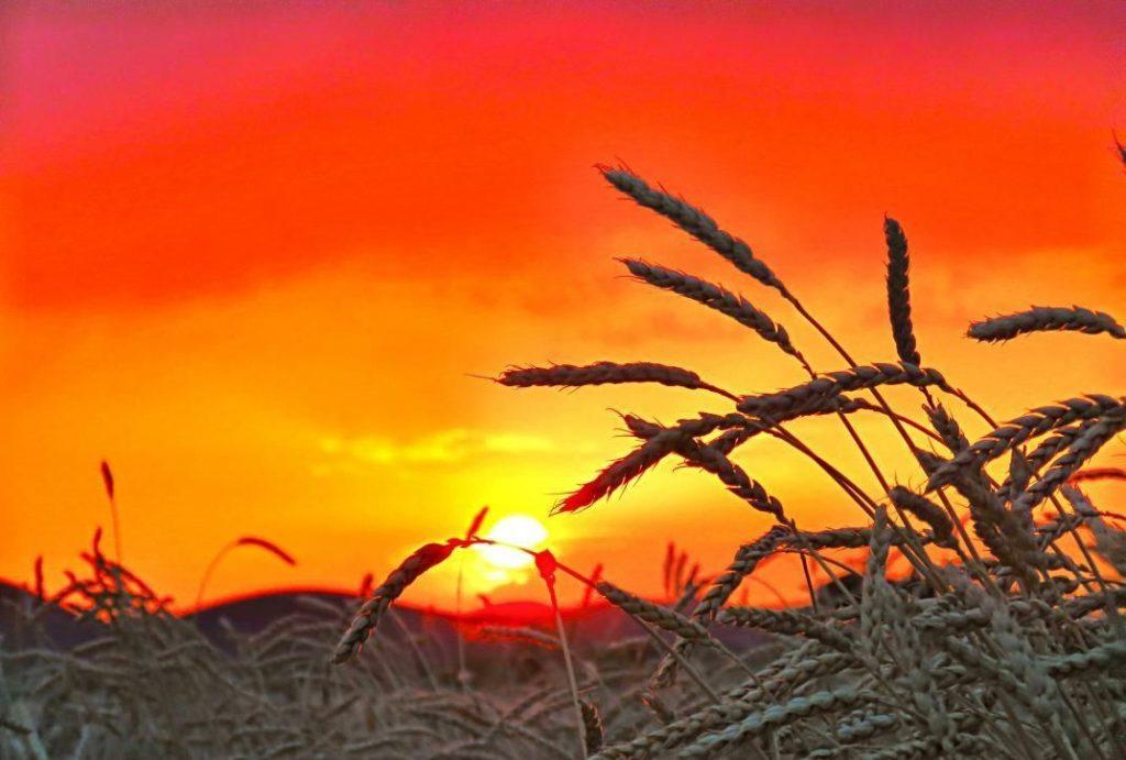 خورشید و کشاورزی