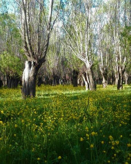 دشت ارژن در حوالی شهر شیراز