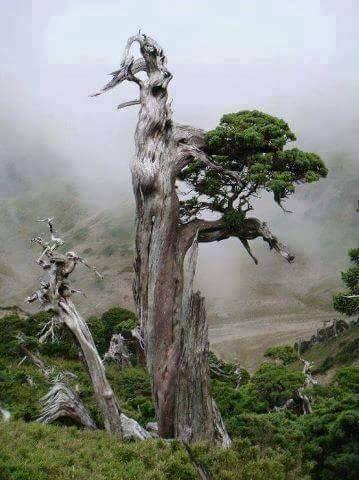 قدمزدن در قلب جنگل در میان مه