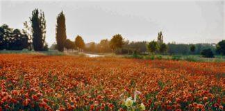 دیدنیهای اطراف شیراز