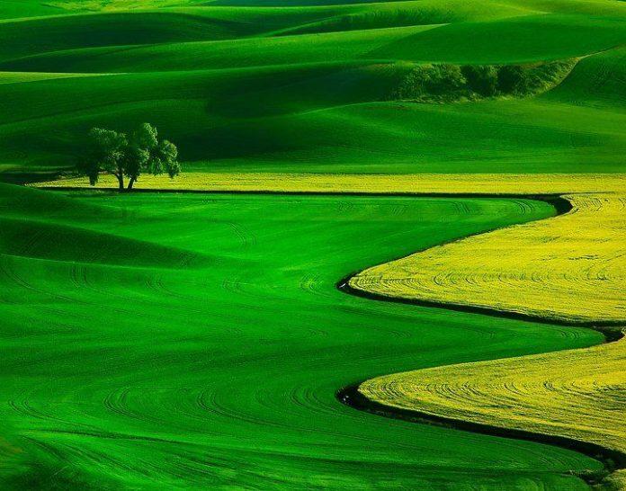 منطقۀ چشمنواز ترکمن صحرا