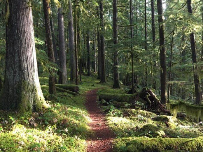 جنگل فضایی ناب، سبز و دلنواز