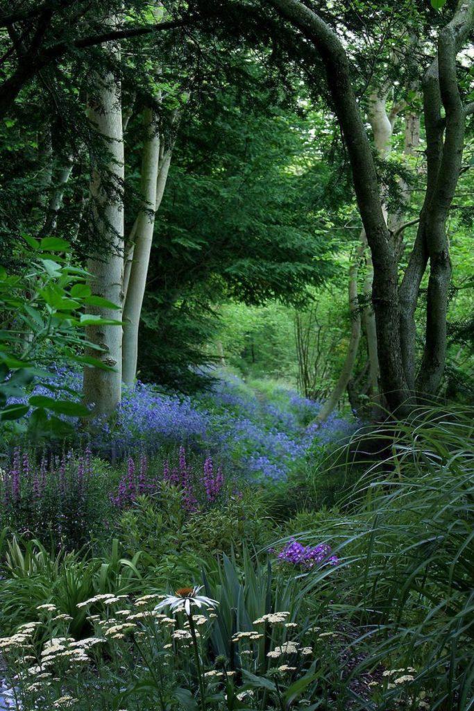 زیستن در قلب جنگل
