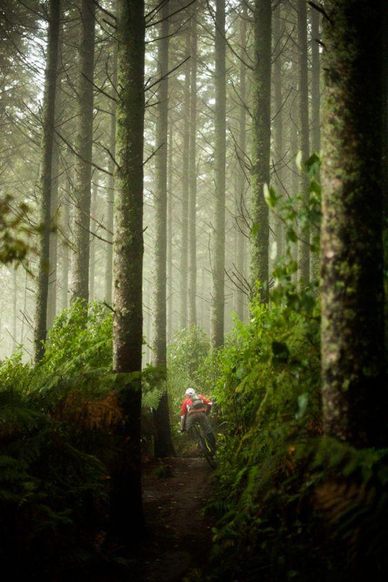 دوچرخهسواری در قلب جنگل