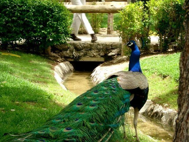 باغ پرندگان در شهر اصفهان