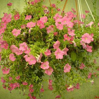 باغ گلها در شهر اصفهان