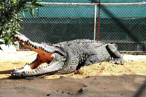 پارک کوروکودیلها در جزیرۀ قشم