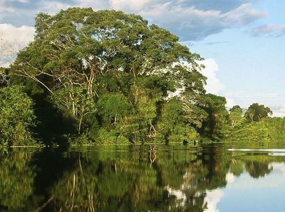 جنگلهای اسرارآمیز حرا در جزیرۀ قشم