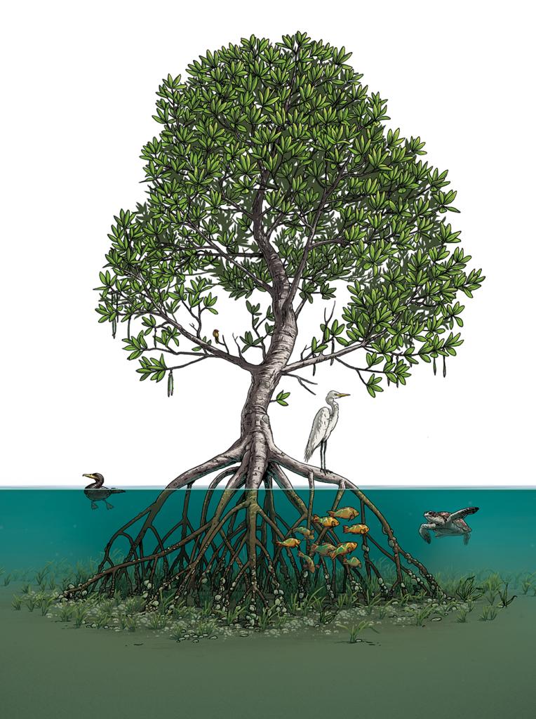 جنگلهای حرا زیستگاهی منحصر به فرد