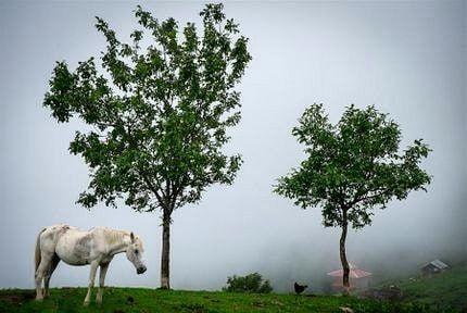 ارتفاعات آلاله زینتی چشمنواز در منطقۀ ییلاقی اولسبلنگاه
