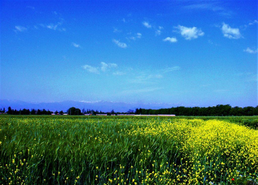 قوچان شهری تاریخی، تماشایی و پرماجرا؛ با طبیعتی منحصر به فرد در استان خراسان شمالی