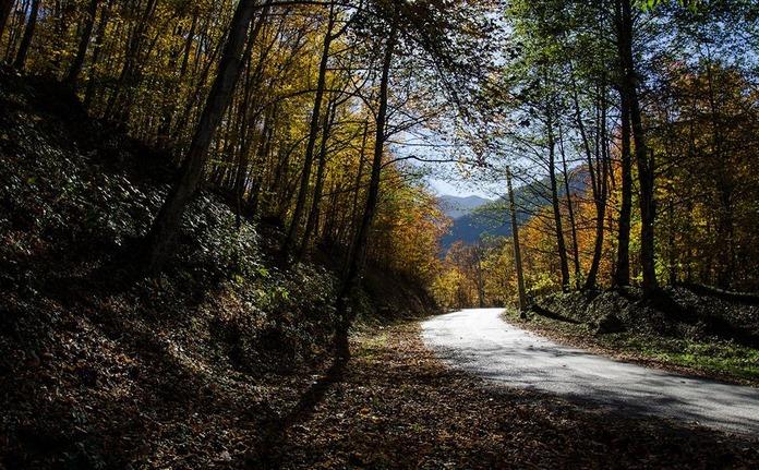 جنگل واز بهترین منطقه چمستان